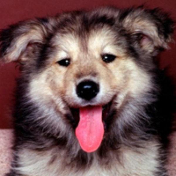 Cute Pet Contest