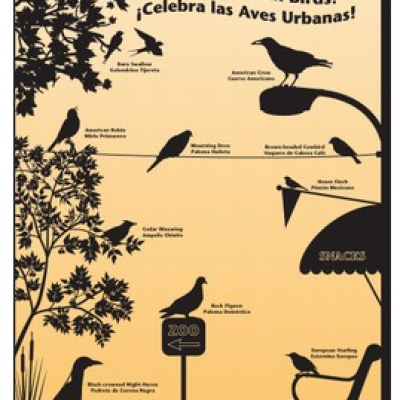 "Free ""Celebrate Urban Birds!"" Kit"