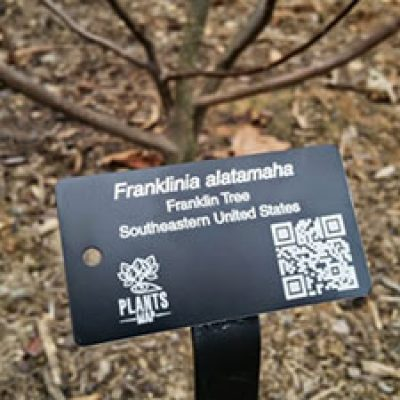 Free Customized Plant Tag Sample