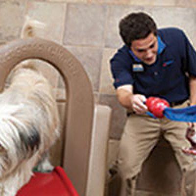Petsmart Grooming & Day Camp Discounts