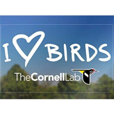Free I Love Birds Decal