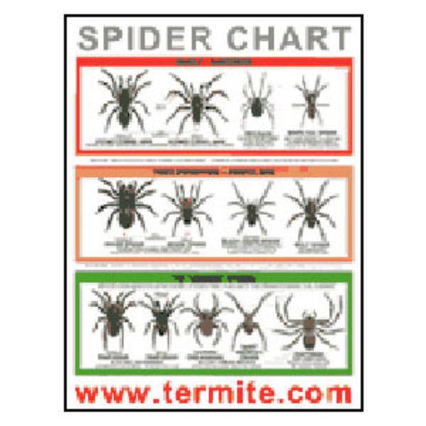 Free Spider ID Chart