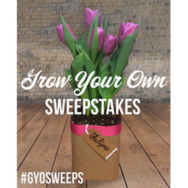 Old Orchard: Win Free Juice & Seeds