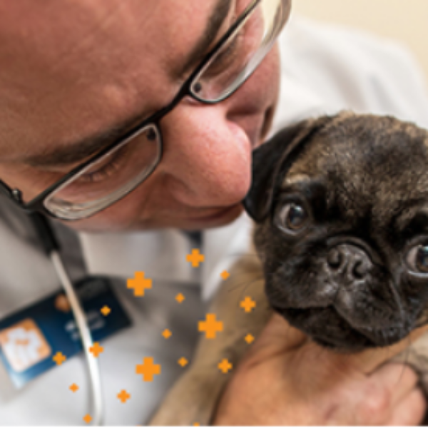 Free Banfield Pet Hospital Visit & Consultation